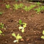 Uma horta nova